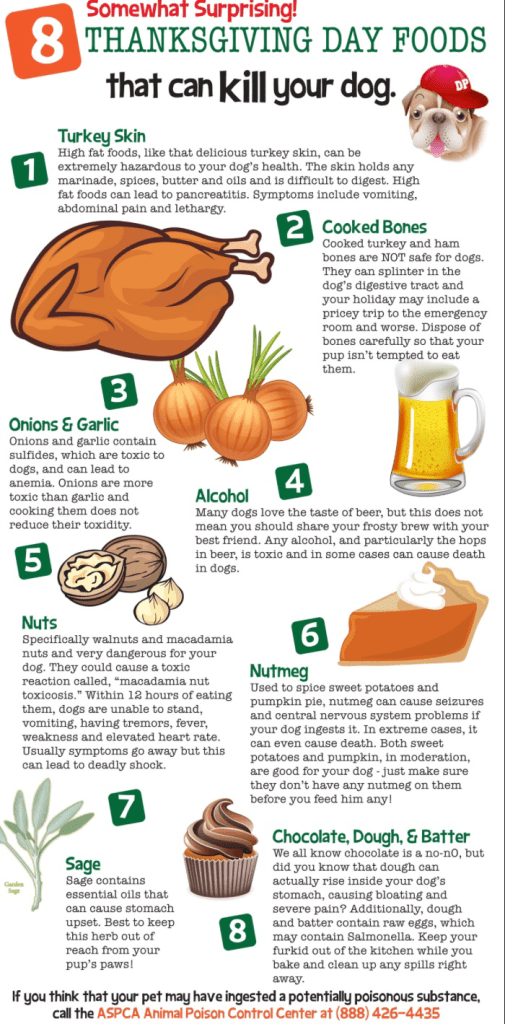 8 Thanksgiving Day Foods That Can Harm Your Pet