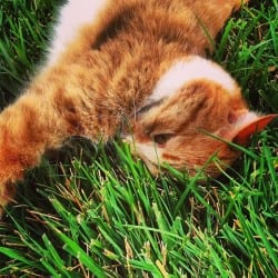 Proper Grooming of Your Pet Dogs and Cats