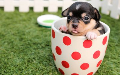How Do I Potty Training My Pupper?