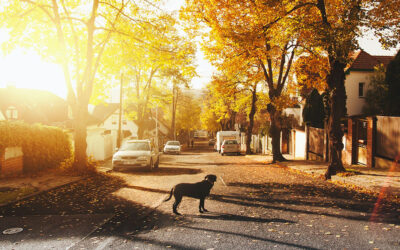 Your Pet Won't Get Lost With These Tips